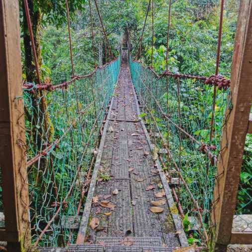 Exploring Borneo Island Hanging Bridges Suspension