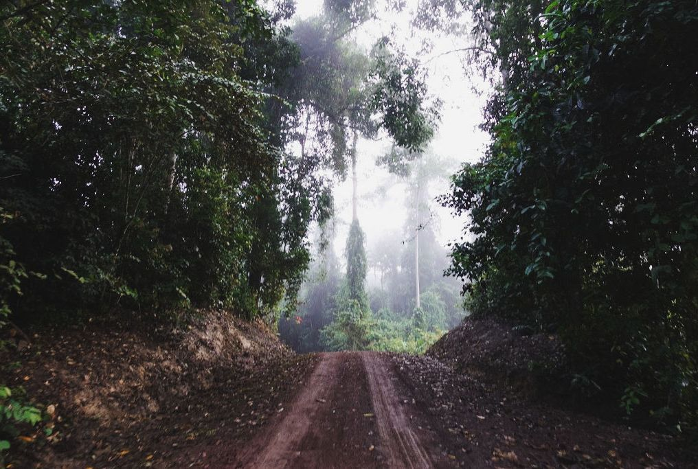 Exploring Borneo Island Morning Trail