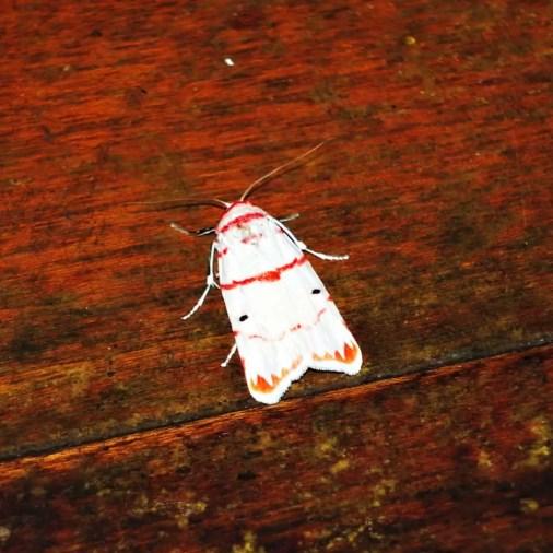 Moth Borneo Rainforest Lodge