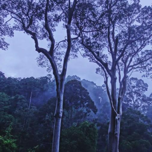 Silhouette trees Borneo Rainforest Lodge