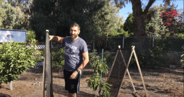 Man standing in front of plant shade frames