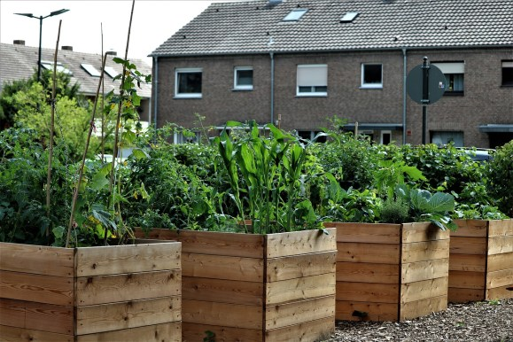 DIY Raised Bed Garden: 3 Building Materials for Creating a Successful Raised Garden