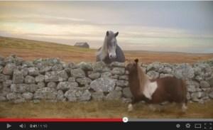 Dance pony dance