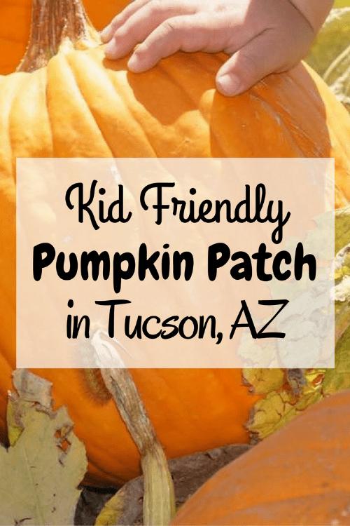 The Marana Pumpkin Patch near Tucson is very kid friendly.