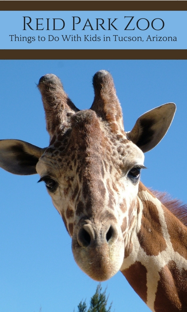 Reid Park Zoo: Things to Do with Kids in Tucson, Arizona