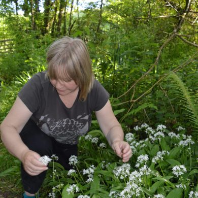 Summer picking Wild Garlic for the Risotto, Wales