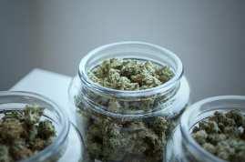 3 jars of cannabis buds at dispensary