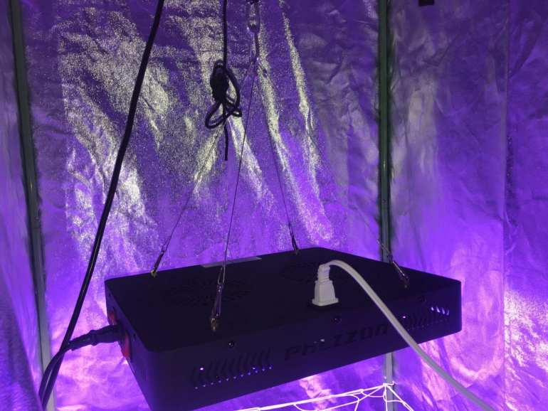 Best led grow light, best indoor grow light, 1200w led grow light in grow tent.