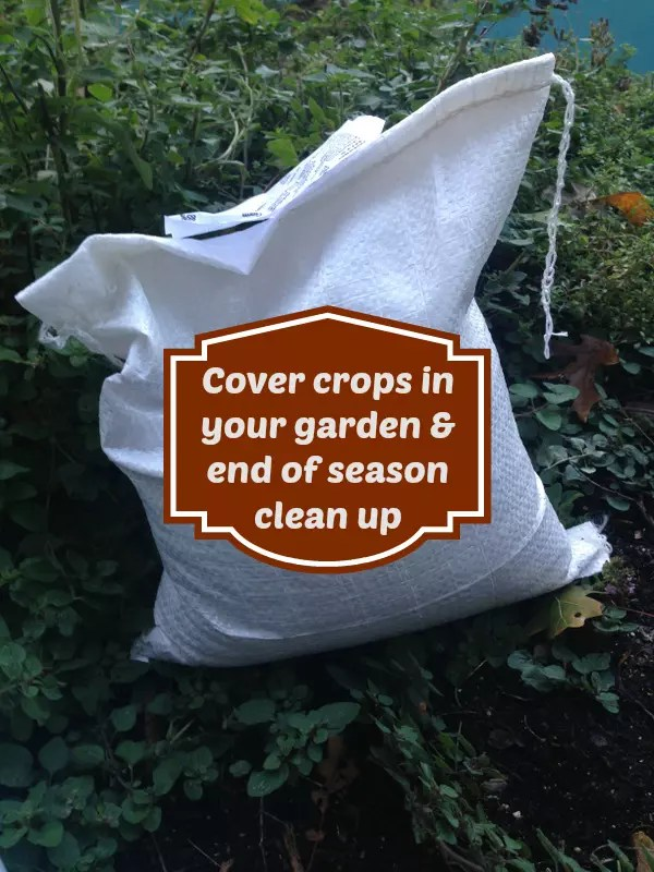 End of season clean up cover crops in your garden - Cover crops for vegetable gardens ...