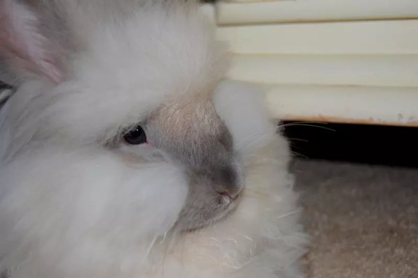 GI Stasis - What Every Rabbit Owner Needs to Know
