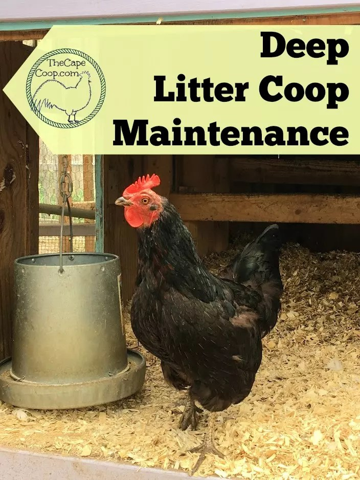 Deep Litter Method Coop Maintence