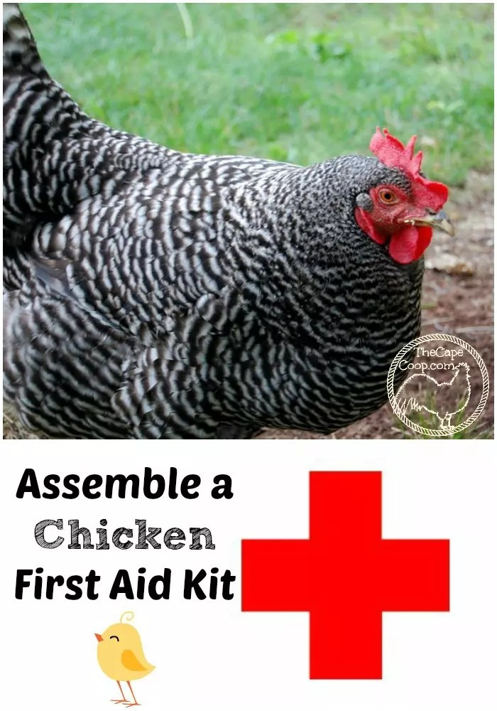 Chicken First Aid Kit - The Cape Coop