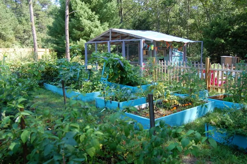 Backyard Permaculture permaculture for the rest of us, abundant living on less than an