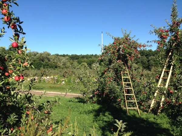 Starting a backyard orchard
