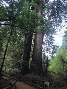san-francisco-muir-woods