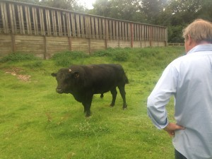 James and his Bull