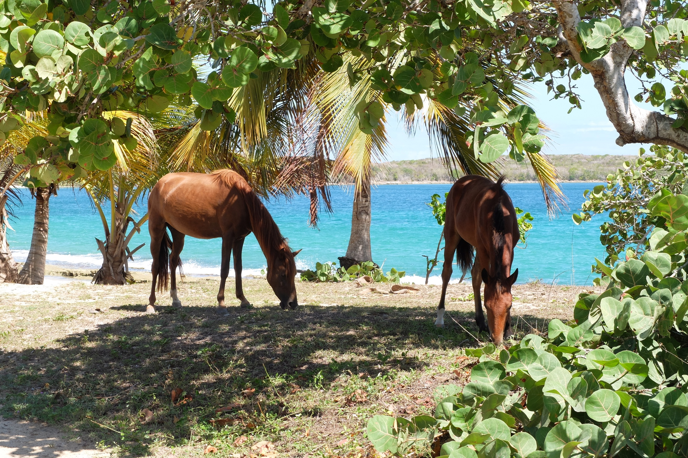 Why Vieques?