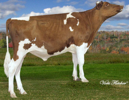 Photo courtesy of West Port Holsteins, www.westportholsteins.ca