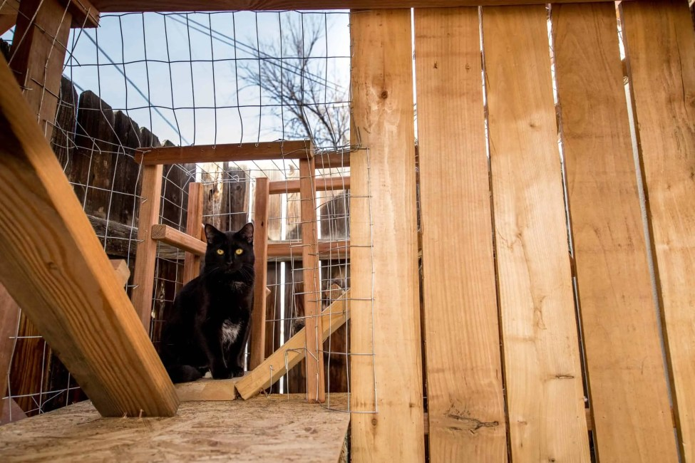 catio black cat outdoor cat enclosure