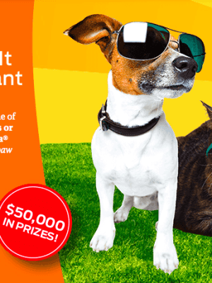 NEW Purina Paw it Forward Instant Win Game {Over 4,000 Prizes}