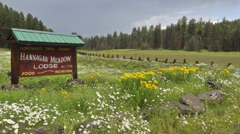 Image result for alpine meadows az blooming in the fall