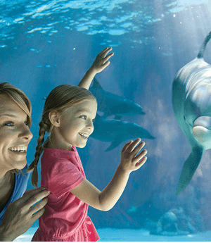 FREE SeaWorld Teacher Fun Card + 2 FREE Single Day Tickets (Teachers in AZ and CA)