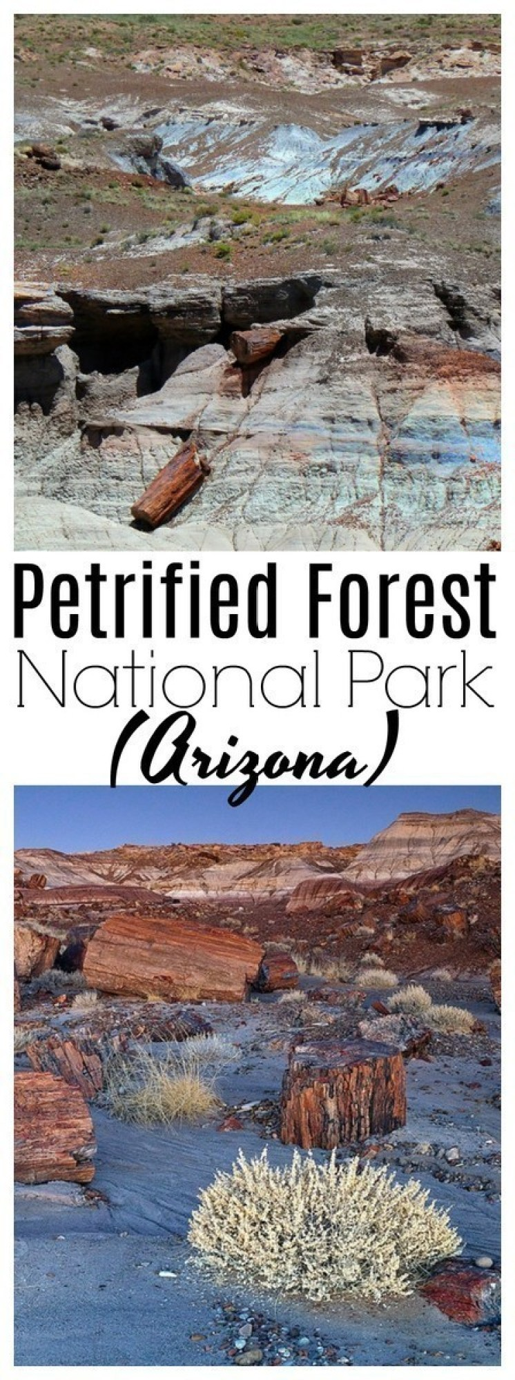 The Petrified Forest is one of the world's largest assemblies of petrified wood - historic structures, and archaeological site.