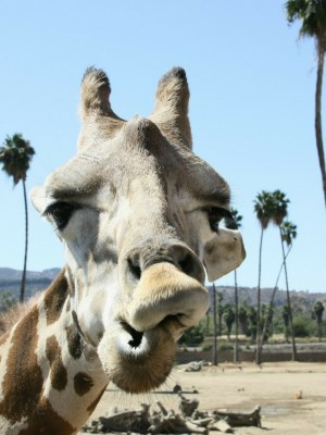 Money Saving Tips for the San Diego Zoo