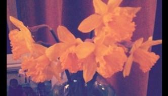 Bringing Spring In