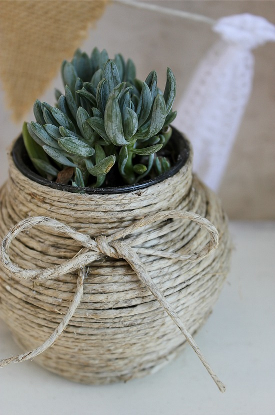 succulents in hemp wrapped jars