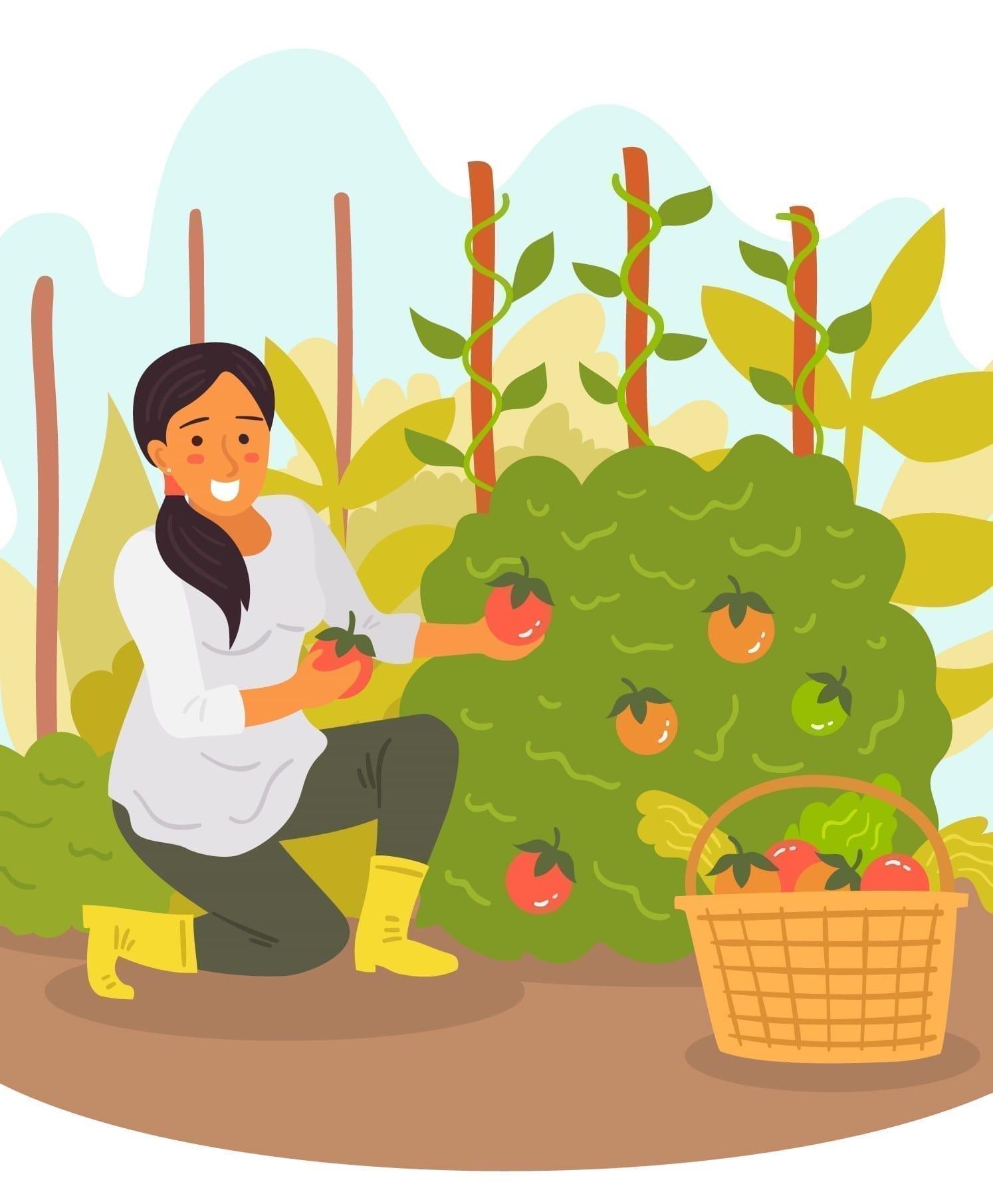 Gardening/Producing Organic Veggies