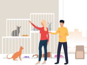 Start Work As Nanny To Pets