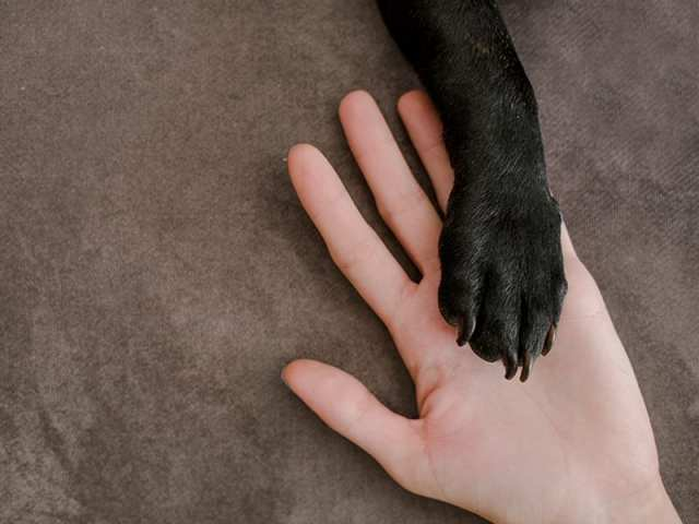 Hard Ticks On Dog