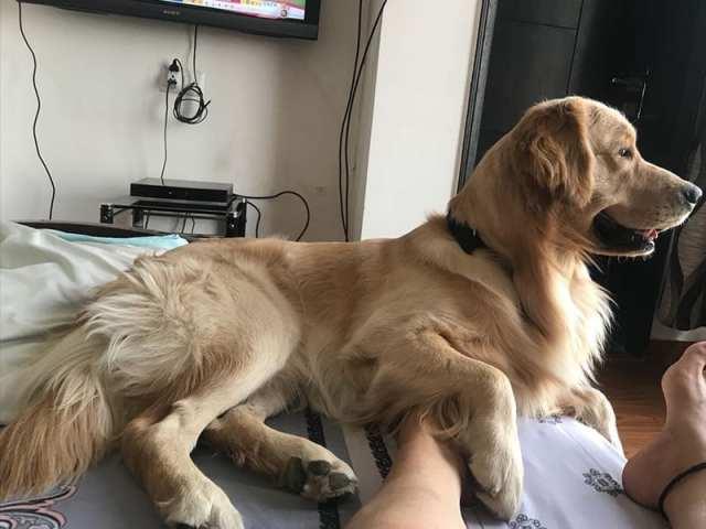 Brown Ticks On Dog