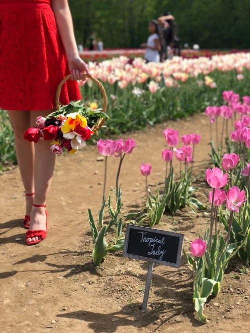 New England flower fields to visit this spring