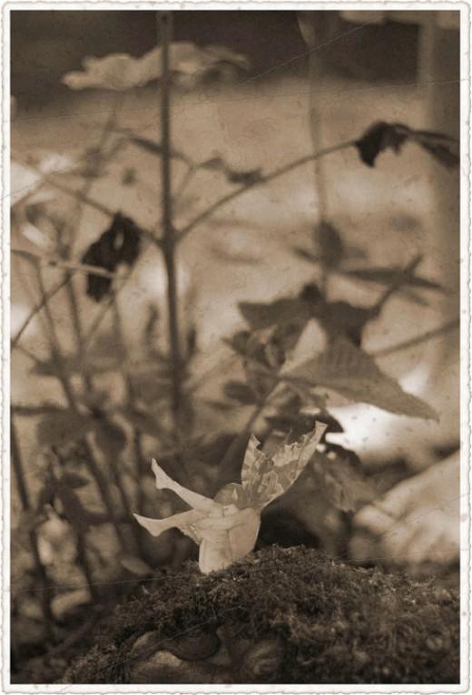 cottingley-fairies-4