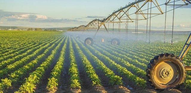 potato crops 720