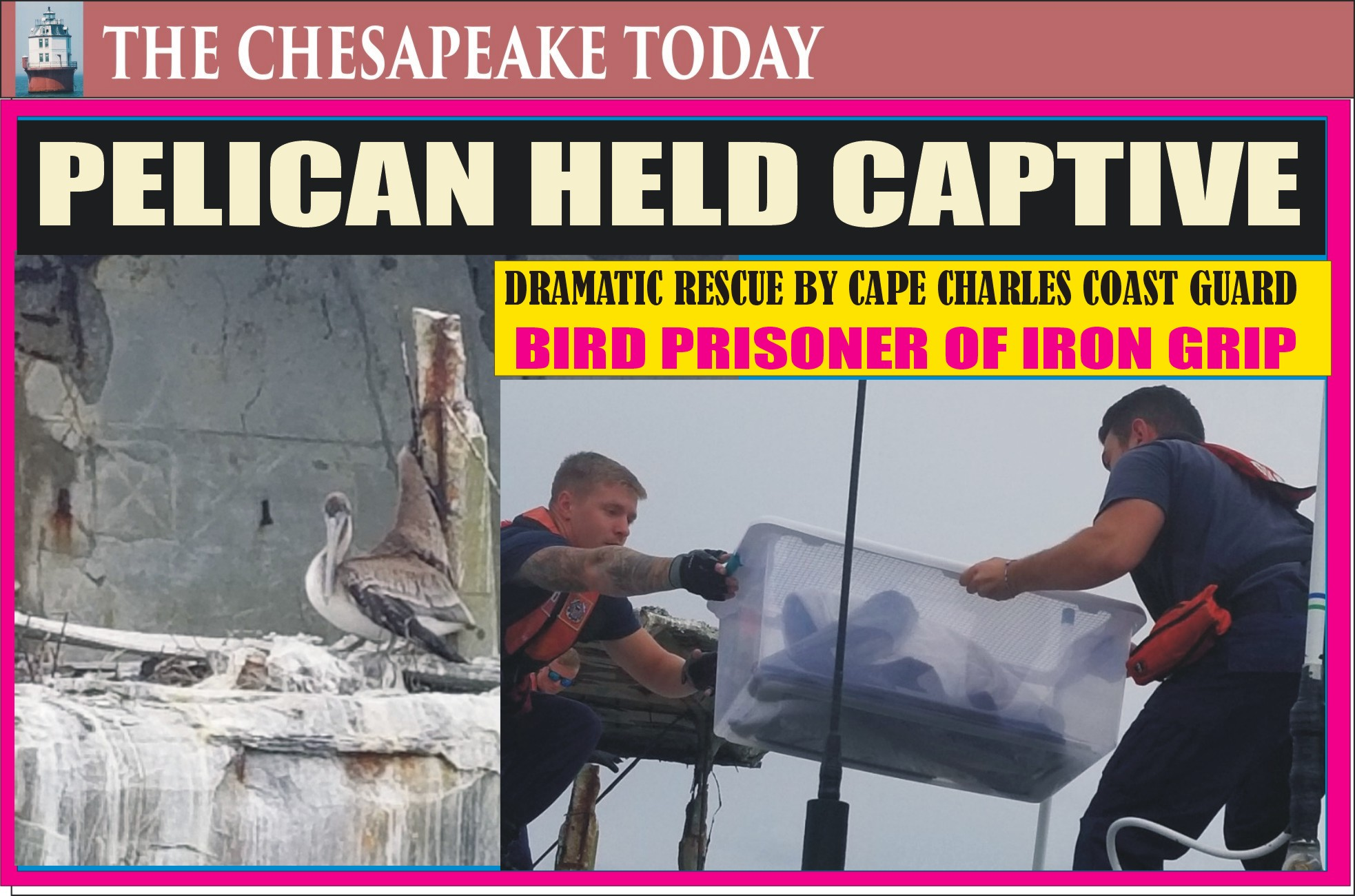 COAST GUARD FREES PELICAN HELD PRISONER ON BAY SHIP: assisted Wildlife ER in rescue