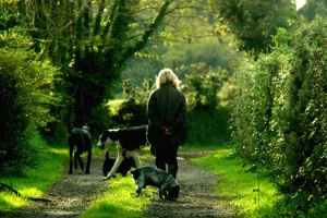 Dog Walking Services in Northwich