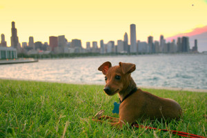 Dog Friendly Chicago Establishments– Plan a Date with your Best Friend