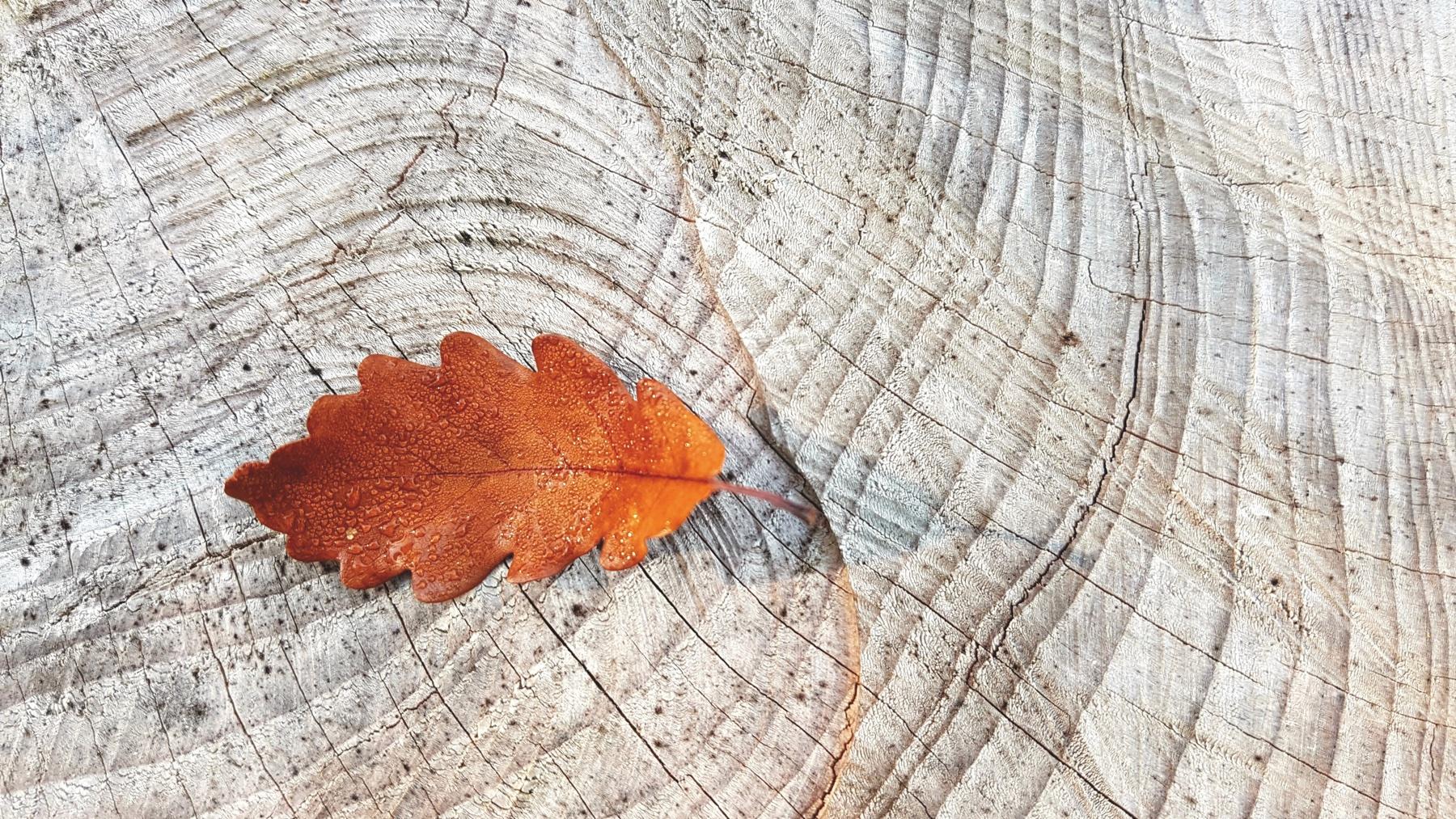 FF201911-autumn-2815427