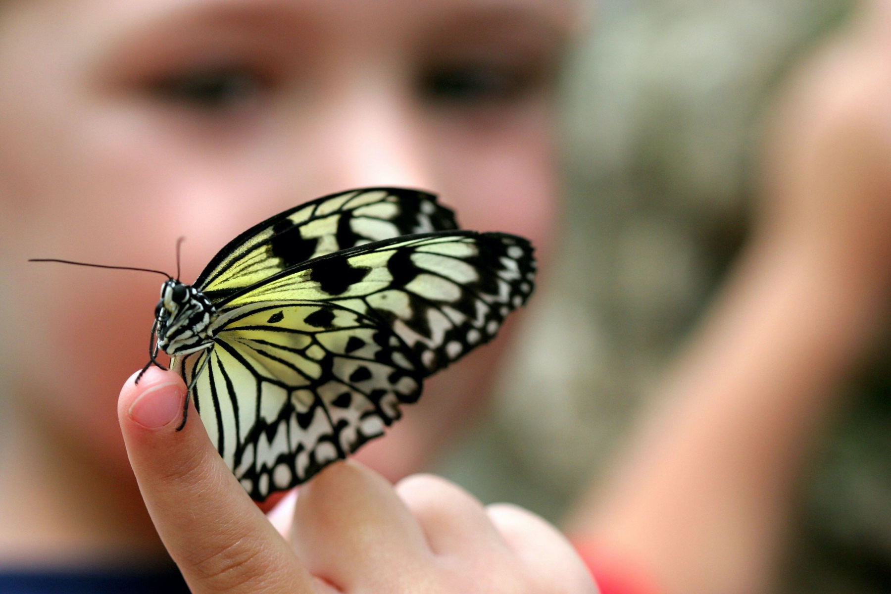 3101708 – selective focus picture of a butterfly on a child's finger.