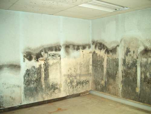 Mold Removal Service Chicago