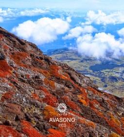 Avasono - Pico - Inyan Music