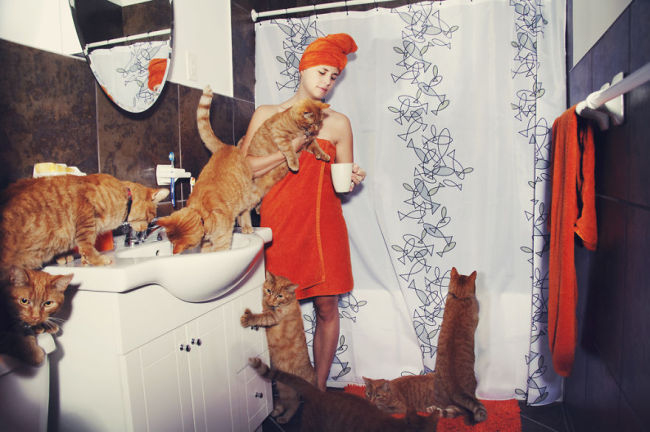 Andreanne-Lupien-cats-photography-8