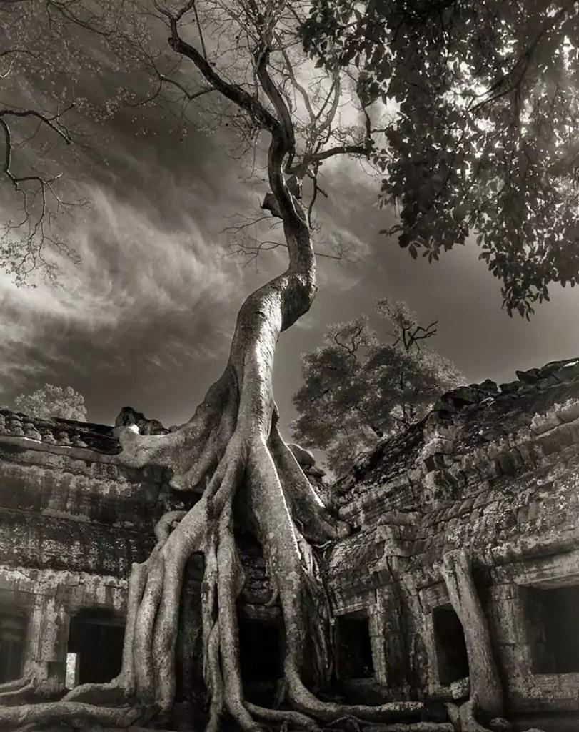 ancient-trees-beth-moon-17-811x1024