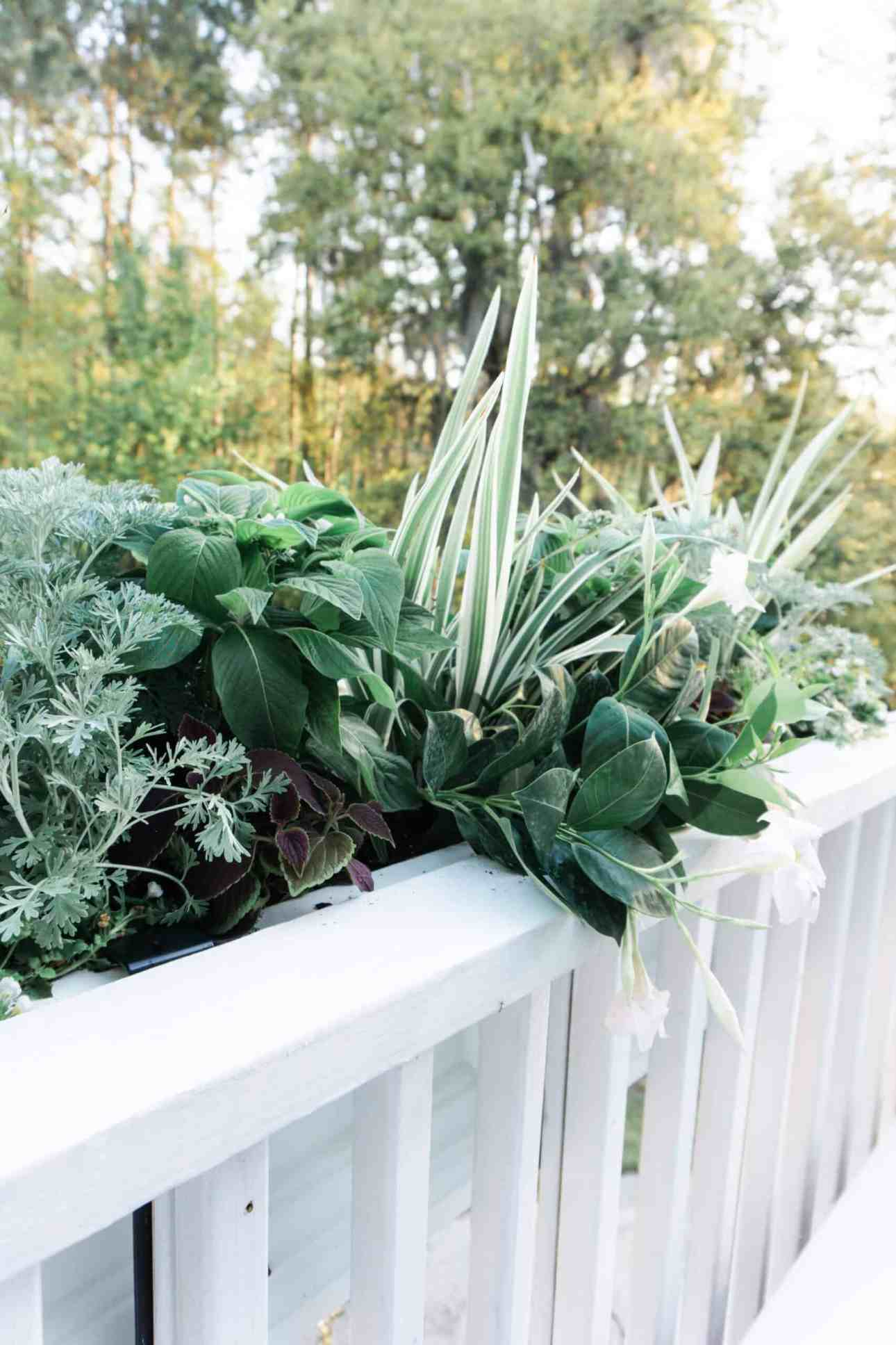 Variety of full sun loving plants in window boxes.