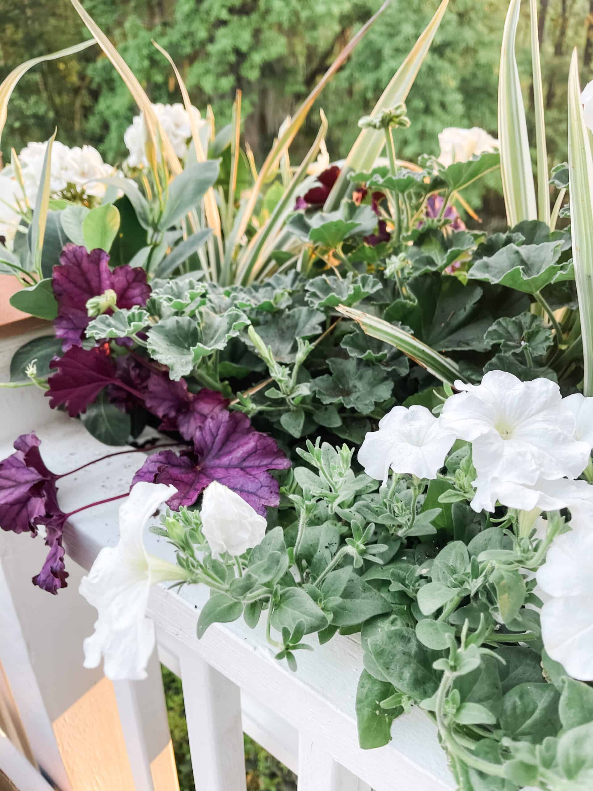 Shade loving plants that are purple and white for shade and partial shade window box.