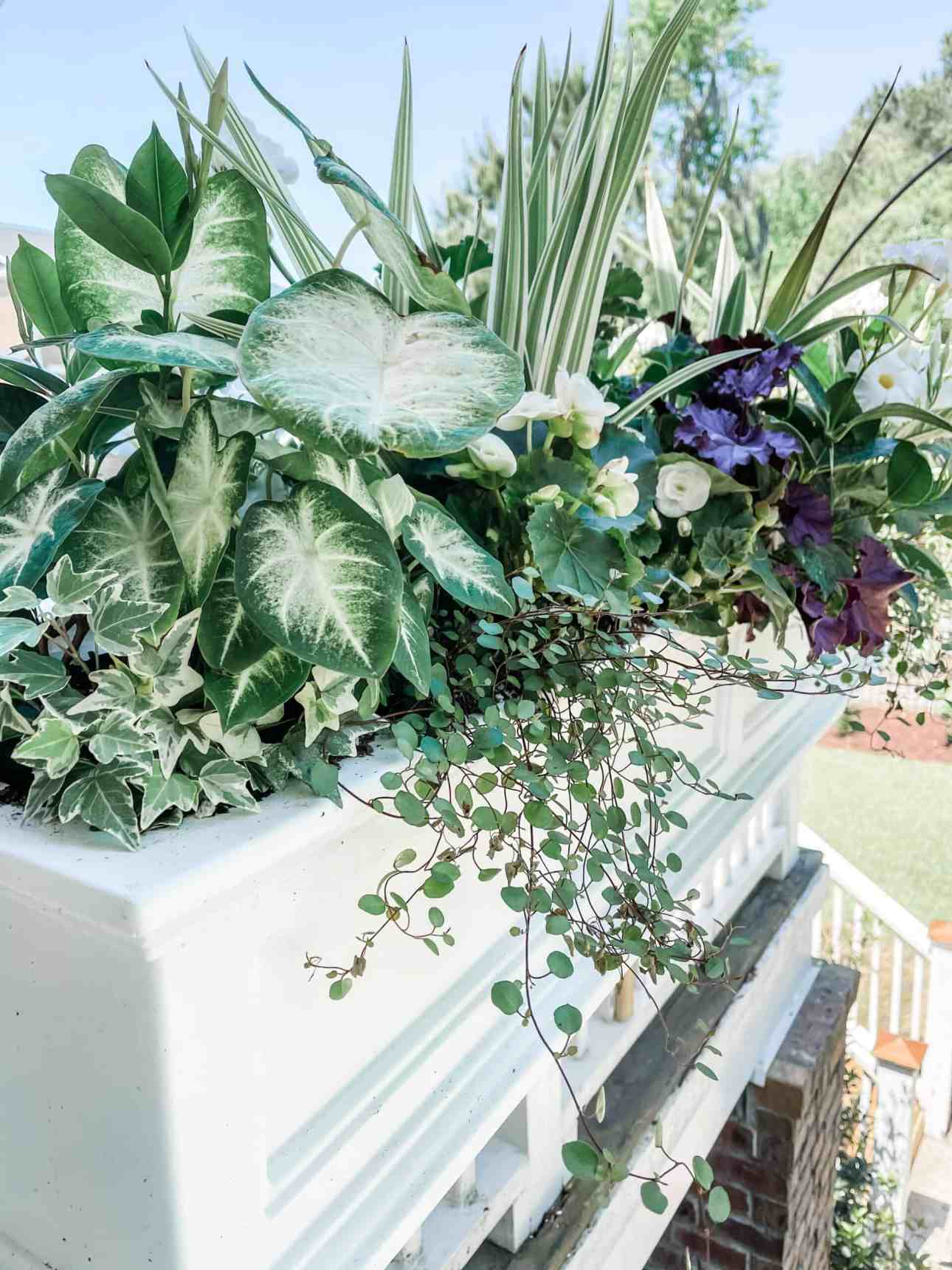 Spillers, thrillers, and fillers in window box