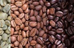 arabica coffee robusta coffee